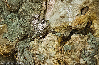 Tree burl, Ward's Pond, Jamaica Plain