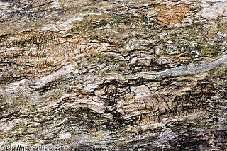 Rotting log, Hall's Pond