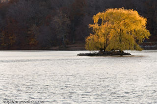 November island in Jamaica Pond