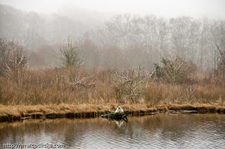 Mist over pond, Woods Hole