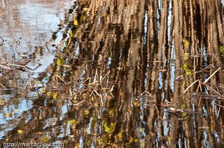 Late fall reflections, Arnold Arboretum, 2009