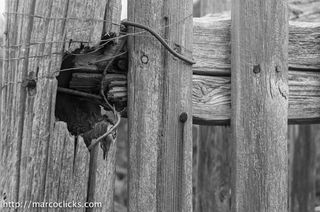 Fence post and wire, Woods Hole, 2012