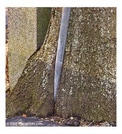 Treeandpost1