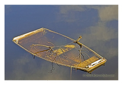 Boat_with_branches_copy