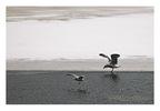 Charles_birds_2_copy