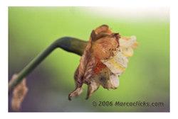 Flowerinfog