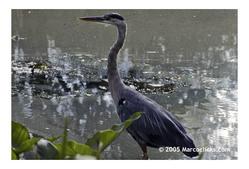 Halls_pond_bird_1