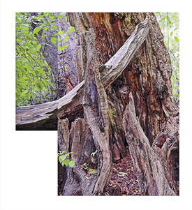 Halls_pond_stump_composite_1