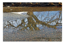 Puddlereflection4