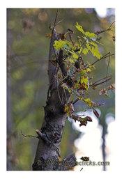 Treeunbound3