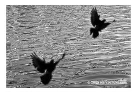 Underpass_pigeons_bw